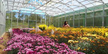 Seorang pengunjung menikmati keindahan kebun bunga di Gardenia County Tomohon. (dodokugmim/natalia tamangunde)